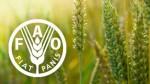 ورشة تكوينية حول تتبع الأمن الغذائي بالرباط من تنظيم منظمة الأمم المتحدة للأغذية والزراعة واللجنة الاقتصادية لإفريقيا