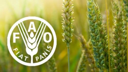 الفاو تطلق دليلا عمليا يساعد الدول على تعزيز الامن الغذائي