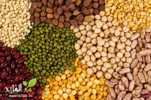 ندوة دولية حول القطاني الغذائية بين 18 و20 أبريل المقبل .