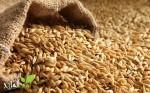 سلسلة الحبوب