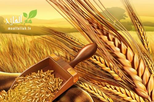 تكريم المغرب في الدورة السادسة لمهرجان الحبوب في إيطاليا