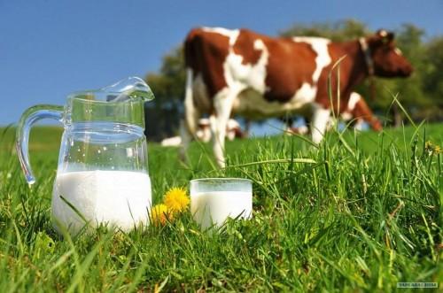 توقيع اتفاقية بمكناس بين مجموعة القرض الفلاحي بالمغرب وسفارة هولندا لتعزيز القدرات التقنية لتعاونيات إنتاج الحليب بمنطقة دكالة