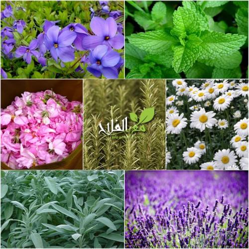 كيف يمكن الإستفادة من التكوين في مجال النباتات الطبية و العطرية؟