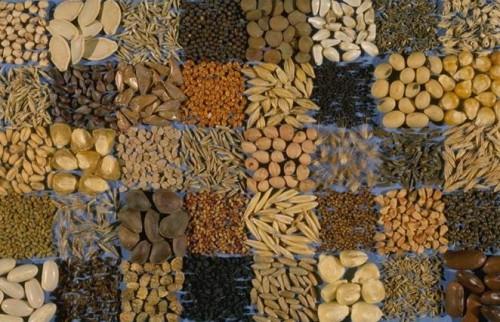 المغرب يشهد دينامية متزايدة في قطاع البذور.