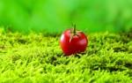 الطماطم والتفاح يساعدان المدخنين السابقين على ترميم رئتهم المتهالكة