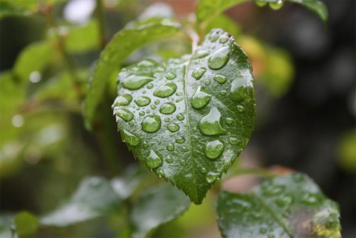 المديرية الجهوية للفلاحة للرباط – سلا – القنيطرة :  الموسم الزراعي يمر بظروف جيدة بفضل الأمطار