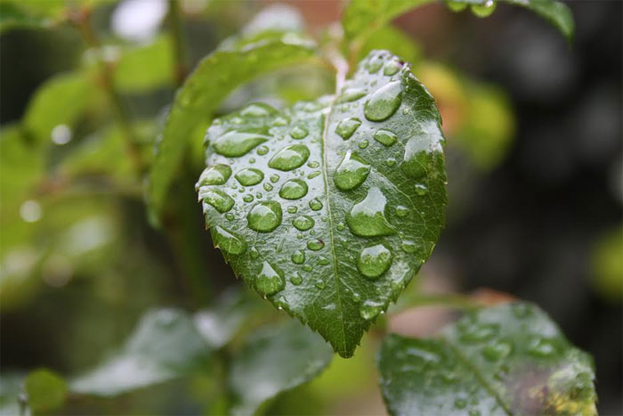 ارتفاع معدل التساقطات المطرية بجهة الرباط-سلا-القنيطرة إلى 433 ملم مقابل 380 ملم السنة المنصرمة
