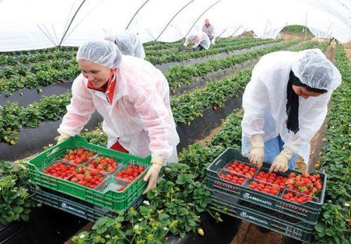 الزراعة الغذائية في المغرب قطاع يتوفر على إمكانات عالية