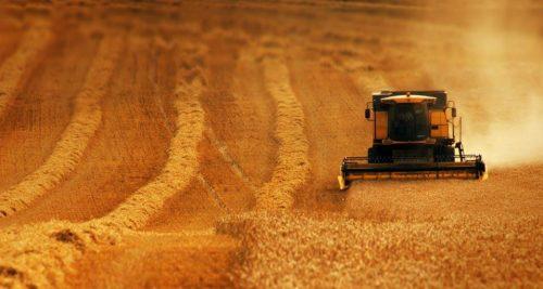 الوقت المناسب للقيام بعملية الحصاد