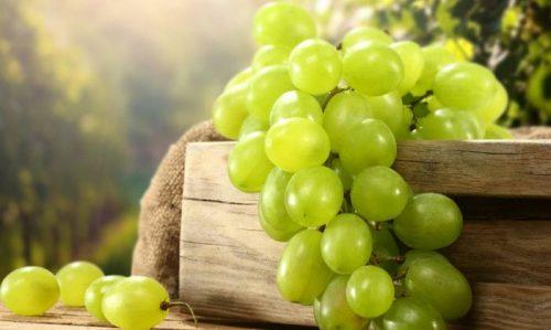 أمراض والآفات الوقائية والعلاج في زراعة العنب – الجزء الثالث