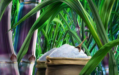 القدرة الانتاجية اليومية لقطاع السكر تصل إلى 6500 طن