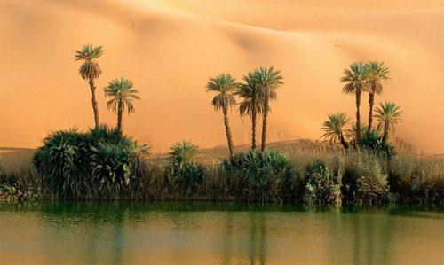 """""""الواحات منبع الحياة بالصحراء"""" شعار الدورة السابعة لمهرجان تاركالت بزاكورة"""