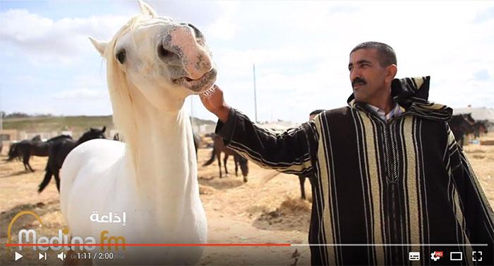 الدار البيضاء تحتضن ملتقى الدولي لسباقات الخيول يومي 17 و18 نونبر الجاري