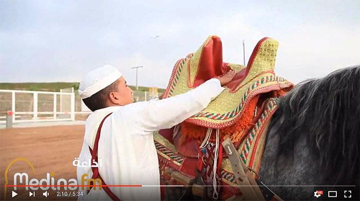 معرض الفرس بالجديدة…ندوة لمناقشة موضوع تربية الخيول العربية الأصيلة