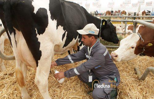 قطب الحليب.. إنتاج 2,5 مليار لتر