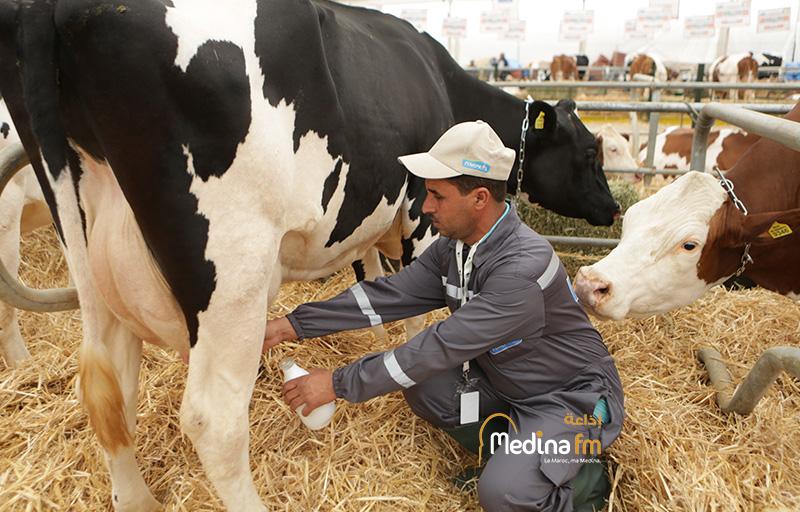 مجلس الحكومة… المصادقة والمنتجات الحليبية على مشروع مرسوم يتعلق بمراقبة إنتاج وتسويق الحليب