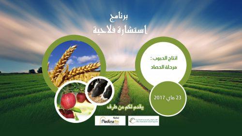 الوقت المناسب لعملية الحصاد:مراقبة نضج الحبوب والظروف المناخية