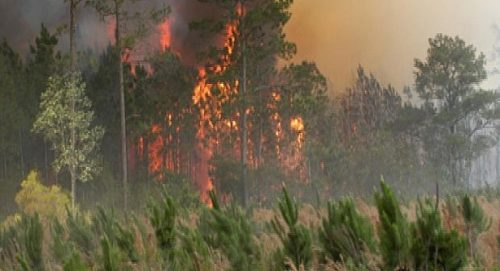 غابات كاب سبارتيل ومديونة والسلوقية بطنجة: تمت السيطرة على حرائق الغابات وعمليات إعادة التشجير ستنطلق في يوليوز 2018