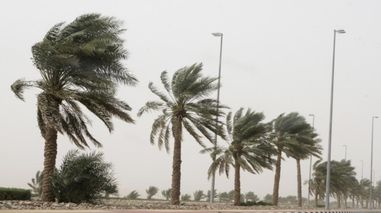 إضطرابات جوية غير متوقعة بمدينة مراكش تسقط الأشجار وتزرع الرعب بالساكنة