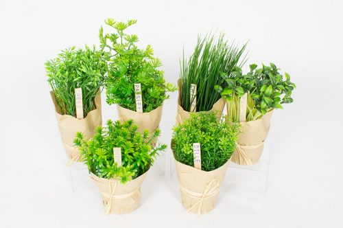 النباتات العطرية… ثقافة شعبية وبديل طبي في المناطق الجنوبية للمغرب