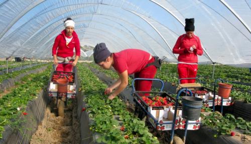 شركة إسبانية تطرد 400 عاملة زراعية مغربية بسب فضيحة التحرش الجنسي