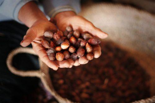 مخطط المغرب الأخضر بإقليم الصويرة..تثمين مؤهلات فلاحية كبيرة في سبيل النهوض بالاقتصاد المحلي