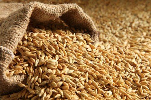 إفران … توزيع أزيد من 12 ألف و 200 قنطار من الشعير المدعم لفائدة الفلاحين.