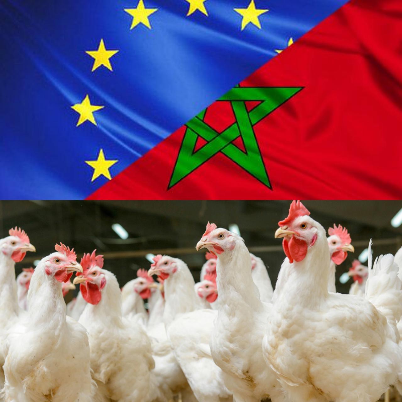 هذا ما صدر عن تقرير الاتحاد الأروبي بعد افتحاص قطاع الدواجن بالمغرب…!!!!!