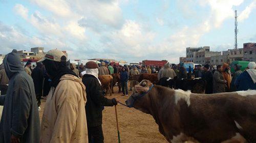 جولة في سوق احد القصر الكبير مع التعاضدية الفلاحية المغربية للتامين
