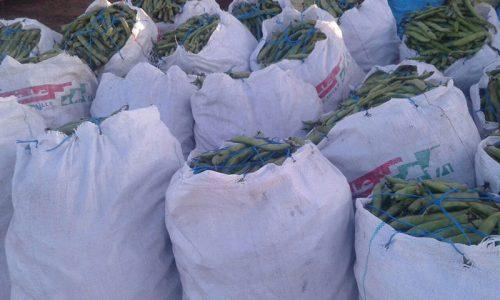سوق اربعاء الفقيه بن صالح مع مامدا