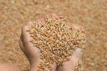 كيف تتجنب ضياع ربع المحصول أثناء الحصاد…معلومات جد هامة لك أخي الفلاح.