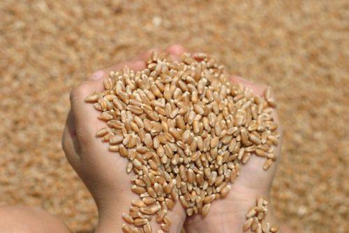 مليون ونصف المليون طن من الحبوب تصدرها أوكرانيا منذ بداية الشهر الجاري