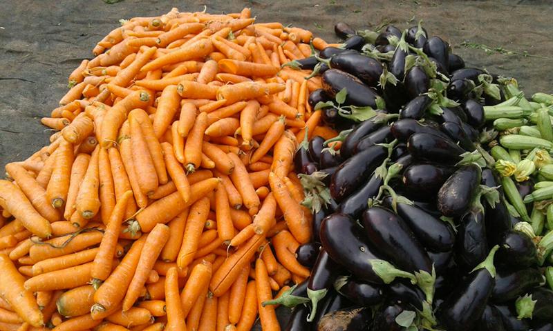فاس مكناس… إنتاج أكثر من 2ر1 مليون طن من الخضروات بالجهة