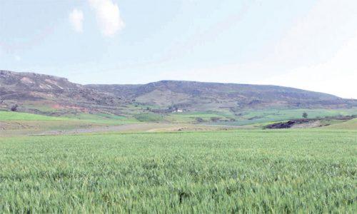 سلاليون يراسلون السفارة القطرية حول مصير تعويضات أراضيهم بإفران