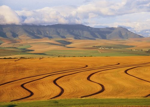 جنوب إفريقيا.. الفاعلون في القطاع البنكي يحذرون من انعكاسات الخطة الحكومية للإصلاح الزراعي