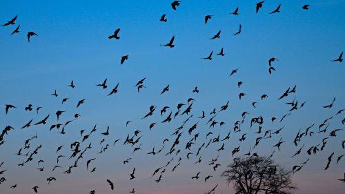 جرد ما يقارب 4330 طائر مائي خلال إحصاء شهر ماي الماضي بالجزائر