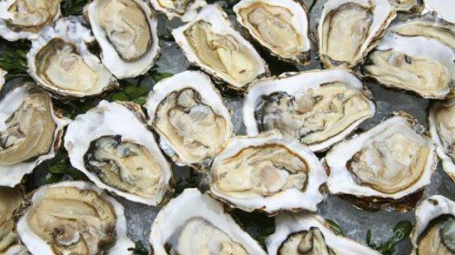 حظر جمع وتسويق الصدفيات بالمنطقة البحرية راس بيدوزا بمنطقة آسفي