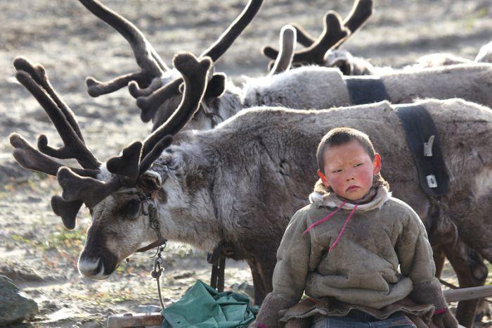 هكذا يعيش رعاة الرنة على الحدود الروسية المنغولية بعيدا عن الحداثة