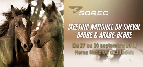 الشركة الملكية لتشجيع الفرس : تنظم الملتقى الوطني للحصان البربري والعربي ـ البربري بالحريسة الوطنية بالجديدة