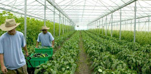 استغلال نحو 500 الف هكتار بالزراعة العضوية بالسعودية