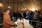 افتتاح النسخة الثانية من المعرض الوطني المهني لسلالة الصردي بسطات