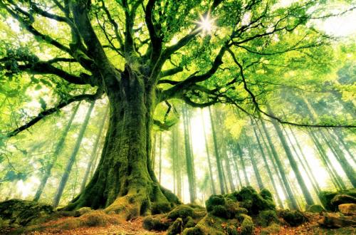 """نادي """"غايا"""" البولوني يعلن عن انطلاق عملية اختيار """" شجرة السنة"""""""