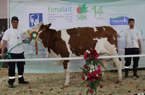 مربي الماشية والأبقار الحلوب يتوجون بمعرض الفلاحة الدولي بمكناس