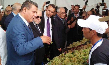 مهرجان العنب بجماعة الشراط بإقليم بنسليمان